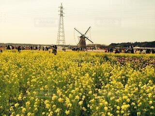 畑に咲く大きな花の写真・画像素材[4874997]
