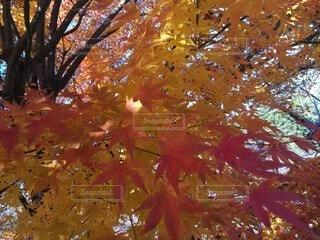木のクローズアップの写真・画像素材[4875957]