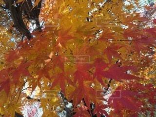 木のクローズアップの写真・画像素材[4875958]