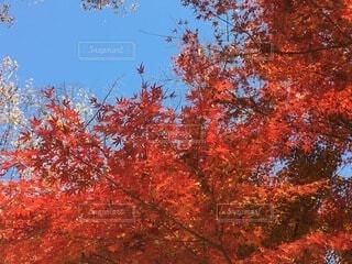 木のクローズアップの写真・画像素材[4875960]