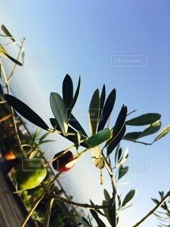 木の枝に花瓶の写真・画像素材[4875976]