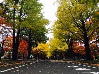 通りの側に木がある空の道の写真・画像素材[4875981]