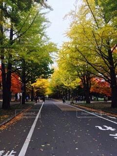 通りの側に木がある空の道の写真・画像素材[4875982]