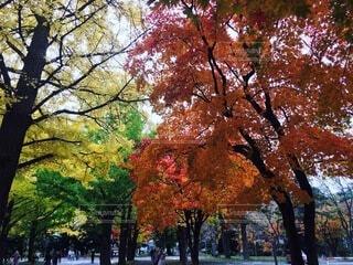 公園の大きな木の写真・画像素材[4875984]