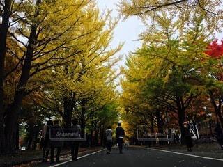 木の隣の通りを歩いている人々のグループの写真・画像素材[4875993]