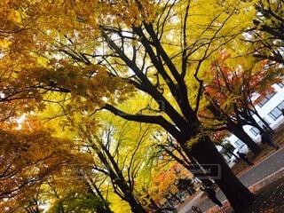 木の隣のベンチの写真・画像素材[4875995]
