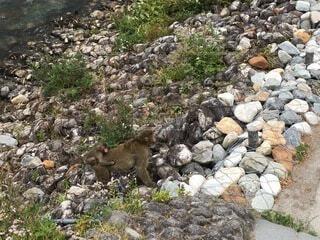 岩の丘の上に立っている動物の写真・画像素材[4876005]
