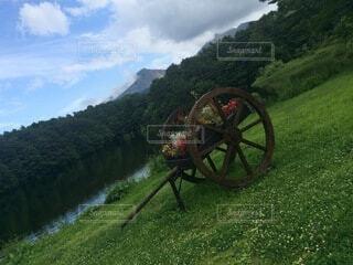 緑豊かな畑のクローズアップの写真・画像素材[4876007]