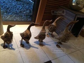 部屋に立っている鳥の写真・画像素材[4876006]