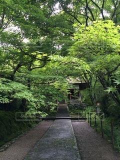 木の隣にある空の公園のベンチの写真・画像素材[4876024]
