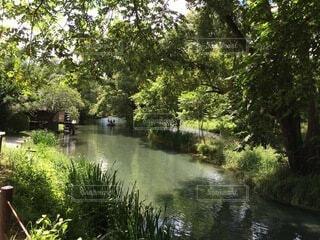 木々に囲まれた水の体の写真・画像素材[4876058]