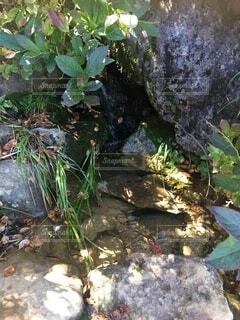 山の湧き水の写真・画像素材[4873503]