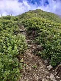 百名山 登山道を歩くの写真・画像素材[4873564]