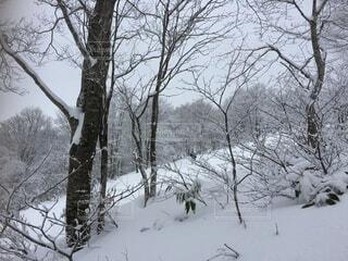 雪に覆われた木の写真・画像素材[4873817]