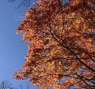 紅葉した木の写真・画像素材[4875740]