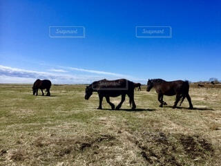 広大な放牧地と馬の写真・画像素材[4875748]