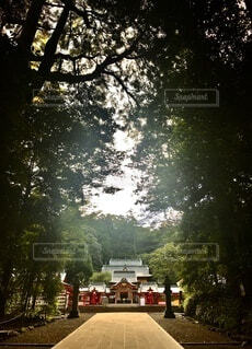 森の中の神社 霧島の写真・画像素材[4882420]