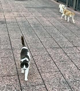 ついてくる猫の写真・画像素材[4882415]