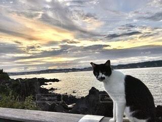 海をバックにした猫の写真・画像素材[4882419]