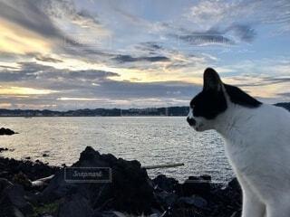 海を眺める猫の写真・画像素材[4882417]