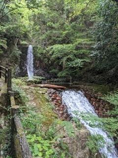 森の中の滝の写真・画像素材[4872906]