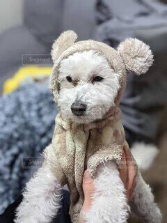 着ぐるみを着た犬の写真・画像素材[4873343]