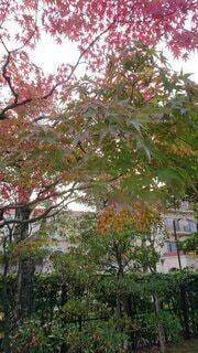 秋の写真・画像素材[4873348]