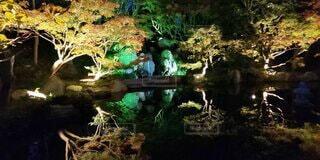 ライトアップされた樹木の写真・画像素材[4873349]