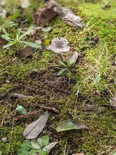 お花の様にひらいたキノコの写真・画像素材[4898479]