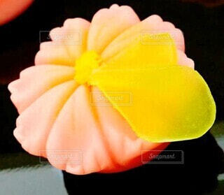 和菓子の写真・画像素材[4873138]