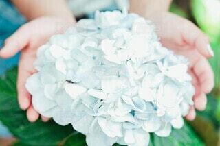 紫陽花の写真・画像素材[4873624]