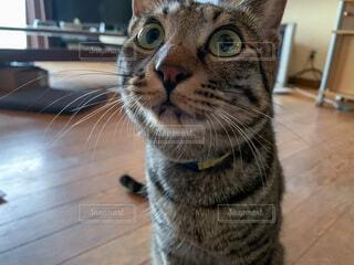 カメラを見ている猫の写真・画像素材[4873464]