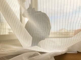 カーテンと出窓と猫の写真・画像素材[4873787]