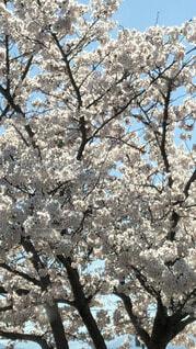 春🌸麗の写真・画像素材[4873299]