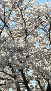春🌸麗の写真・画像素材[4873399]