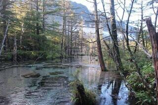 水の池の写真・画像素材[4874385]