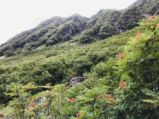 高山植物の写真・画像素材[4874387]