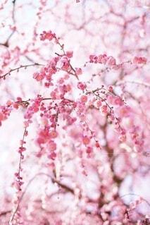 花のクローズアップの写真・画像素材[4874514]