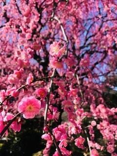 花のクローズアップの写真・画像素材[4874517]