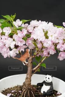 テーブルの上に花の花瓶の写真・画像素材[4898668]
