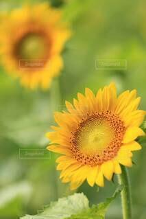 花のクローズアップの写真・画像素材[4898673]