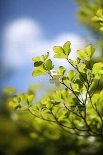 花のクローズアップの写真・画像素材[4898675]