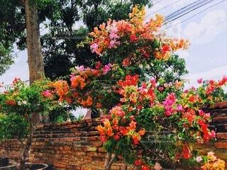 ベンチに座っている花の花瓶の写真・画像素材[4898689]