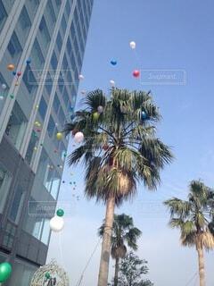 都市で凧を飛ばす浜辺のヤシの木の群の写真・画像素材[4898687]