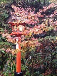 庭の真ん中に木の写真・画像素材[4898688]