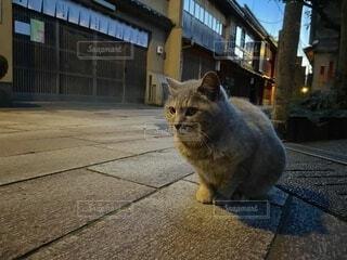 歩道の上に座っている猫の写真・画像素材[4874678]