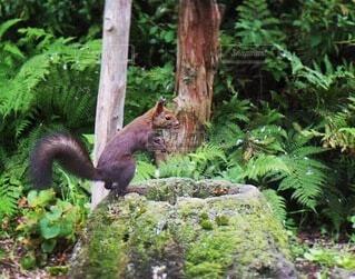 森の中に立っているリスの写真・画像素材[4874676]