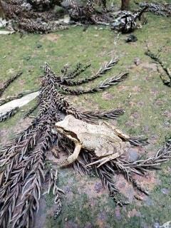 カエルの写真・画像素材[4886244]