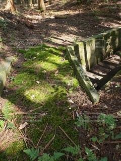 森の中に生えるこけの写真・画像素材[4886257]
