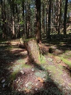 山の中森の中の写真・画像素材[4886307]